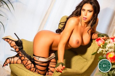 Meet the beautiful TS Aysha Garbatelli in Dublin 9  with just one phone call