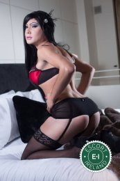 Meet the beautiful TV Zara in Dublin 1  with just one phone call